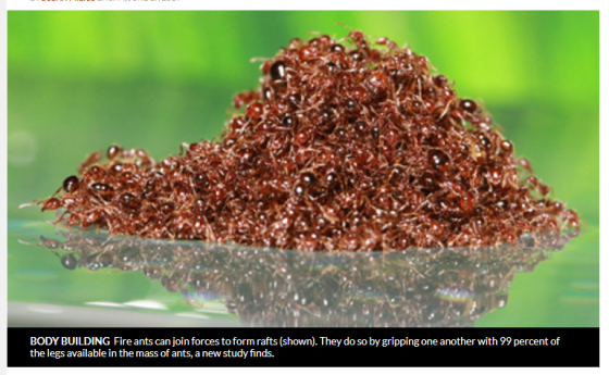 Beware of Fire Ants During Hurricane Cleanup
